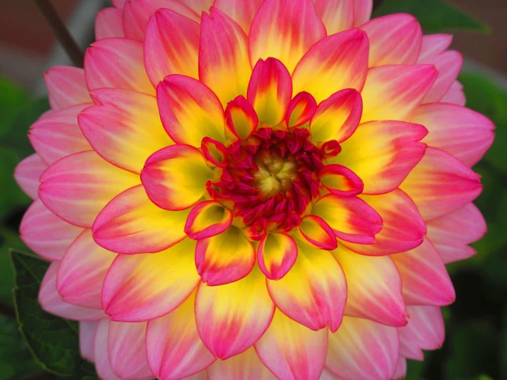 Parvati | Positive Possibilities: Manifest Your Deepest Joy, by Parvati Devi image 1